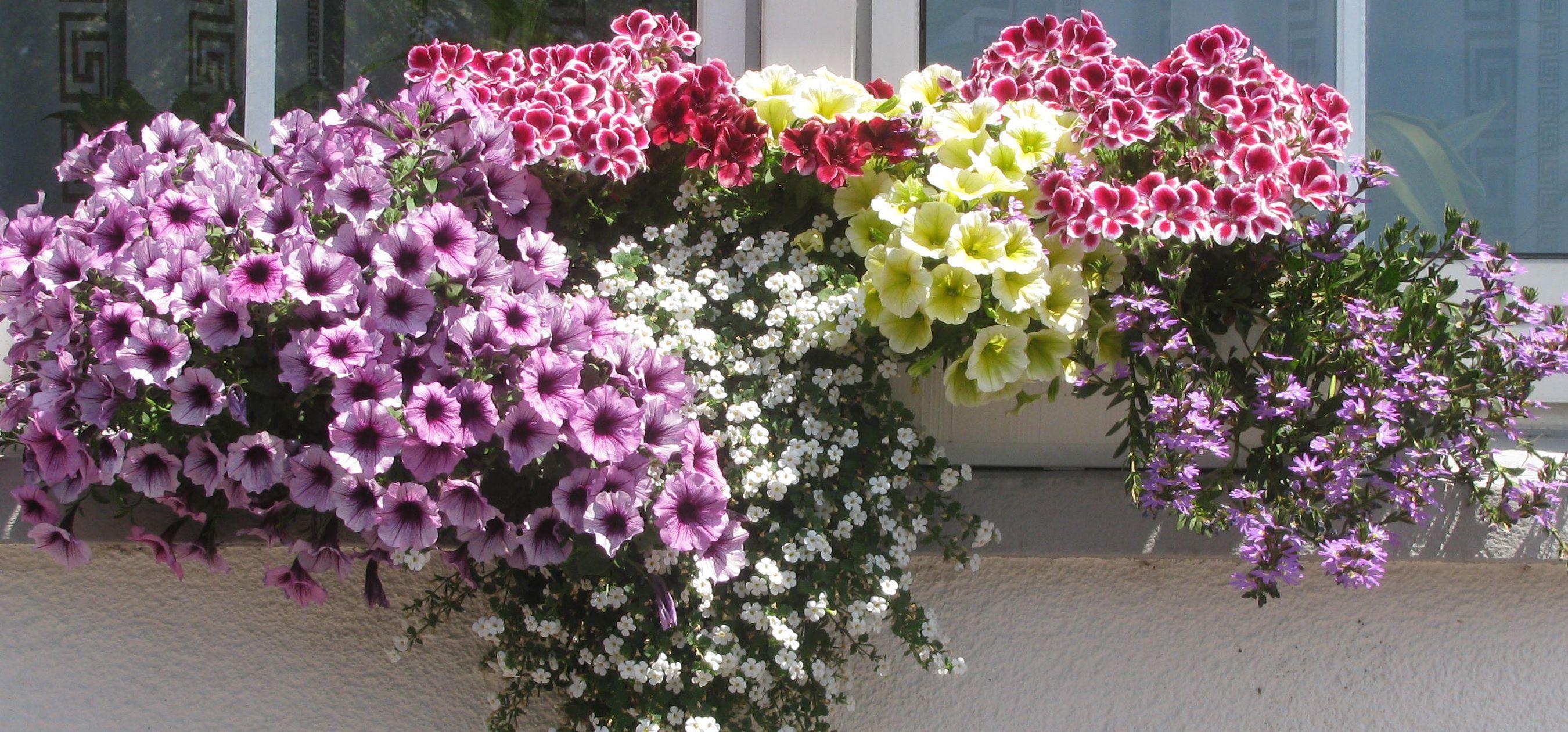 Balkon Blumenkästen Bepflanzen   Google Suche