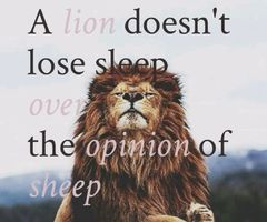 A Lion Doesn T Lose Sleep Google Search With Images Lion Quotes