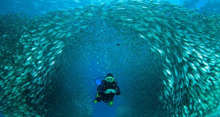 Daily Adventures – 10 Amazing Scuba Diving Images