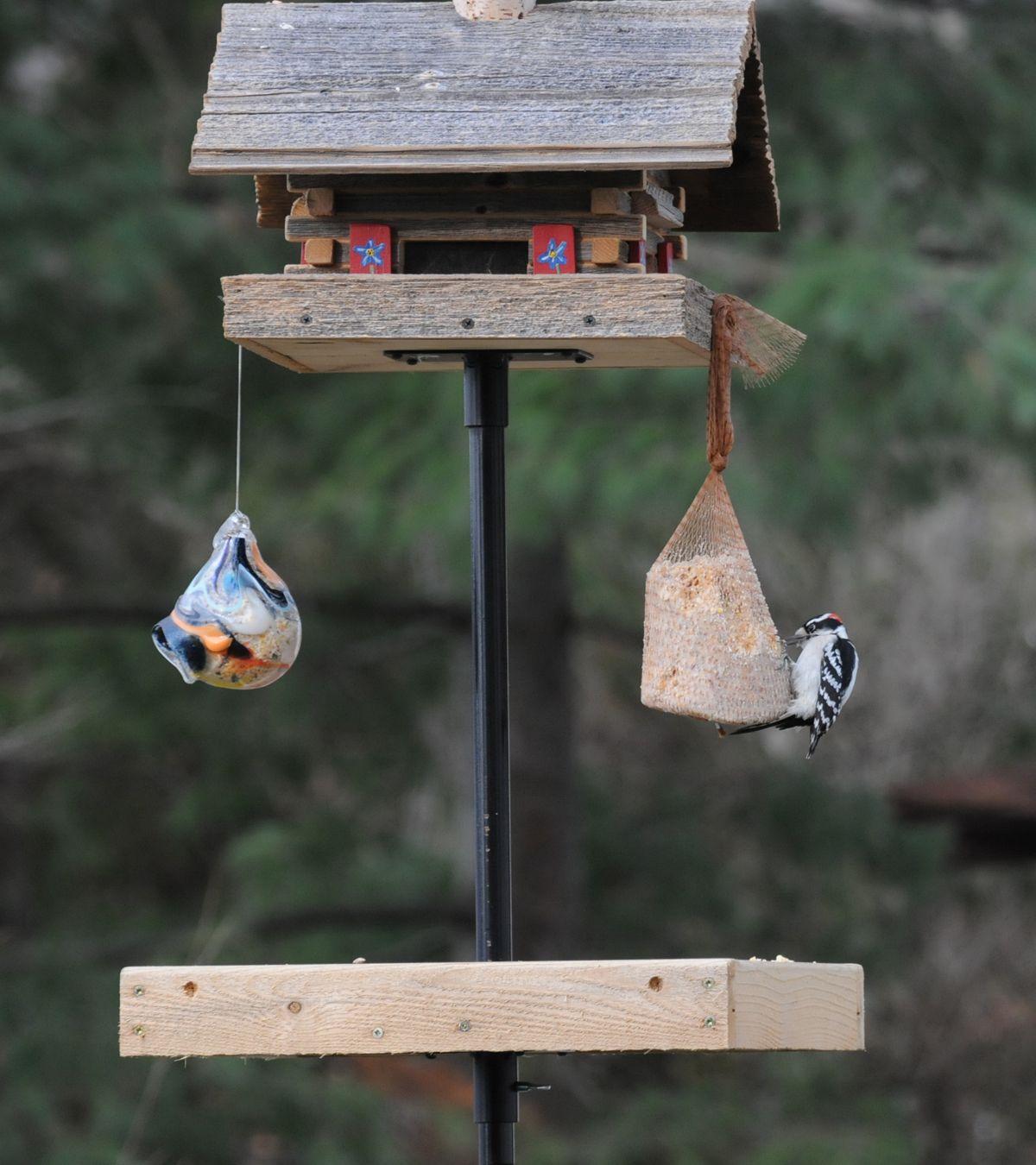 Create a great a feeding station for your backyard birds ...