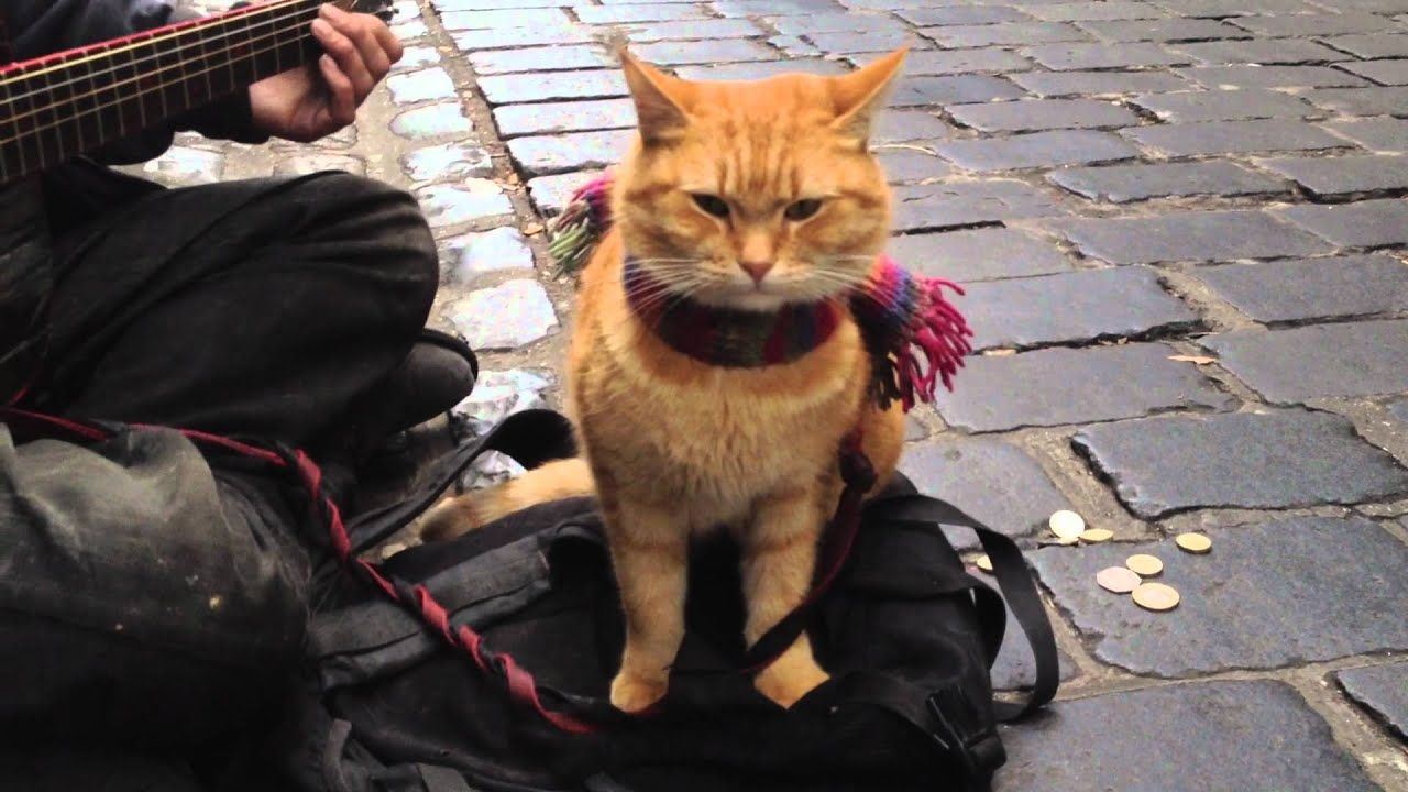 """""""A Street Cat Named Bob"""" The Big Issue cat iPhone 4s"""