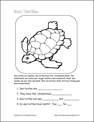 Life Cycle of a Sea Turtle | PreK-K Worksheets | English | TpT