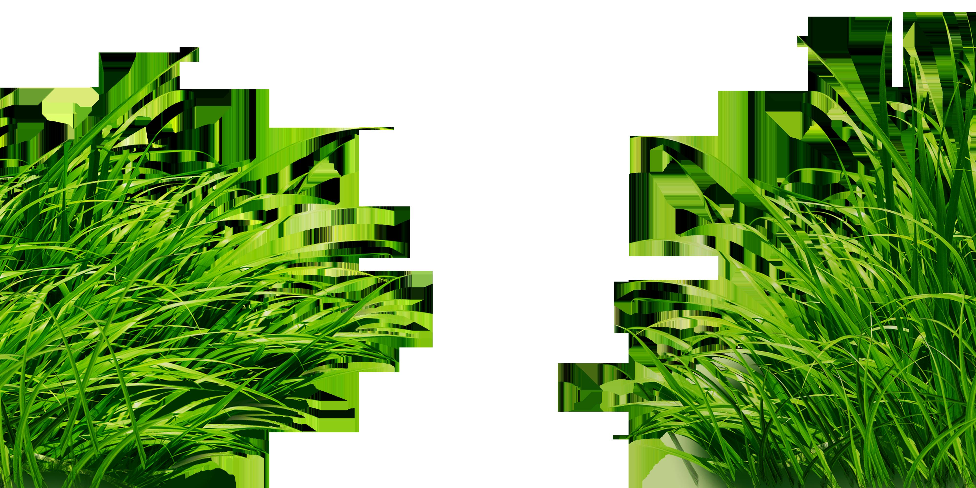 картинки без фона для презентаций зеленая трава потому, что дорога