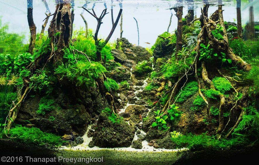 2016 AGA Aquascaping Contest - Entry #130 | Aquarium ...