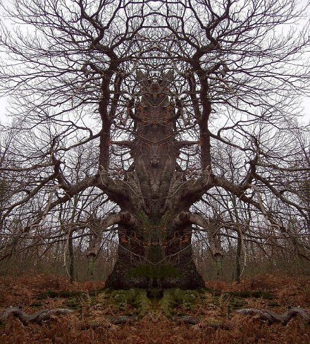 strange and amazing trees
