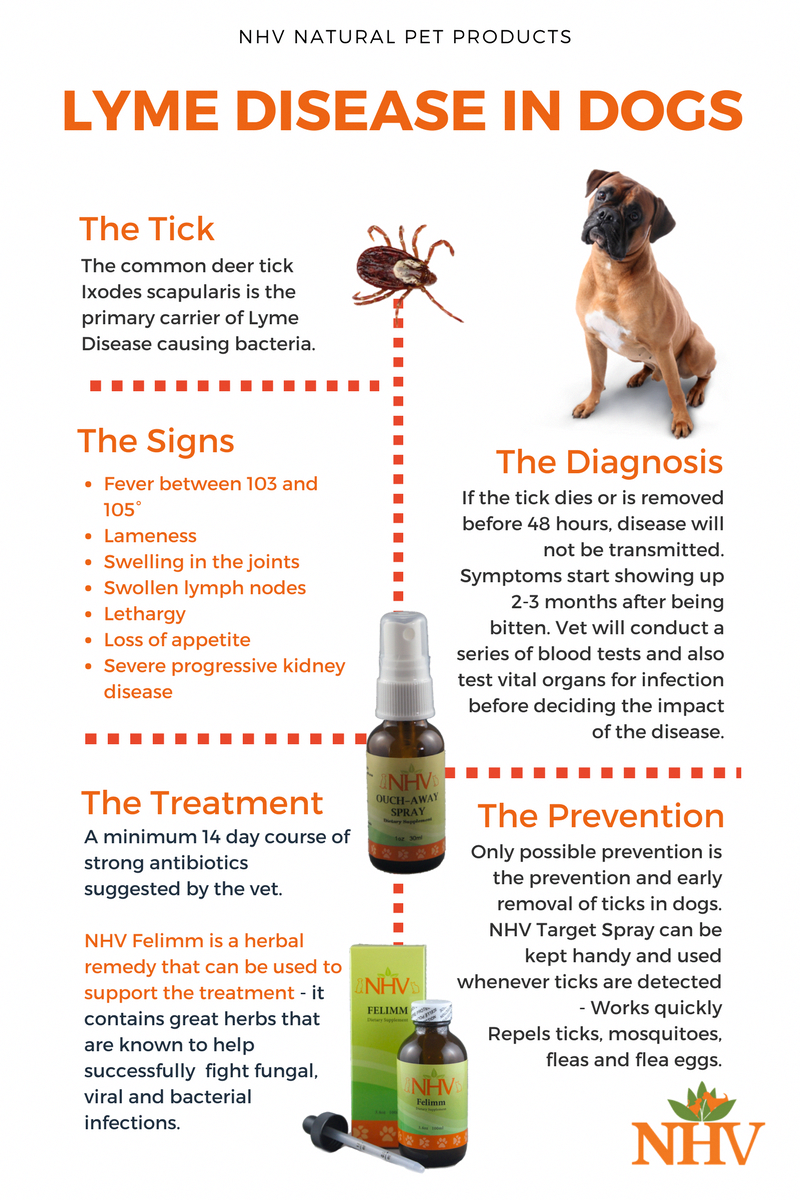 Lyme Disease In Dogs - Prevention, Symtpoms