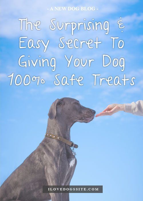 The Surprising Easy Way To Give Your Dog 100 Safe Treats Dogs
