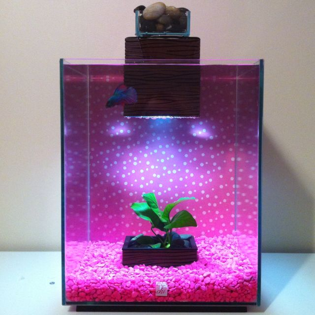 Fluval chi aquarium with halfmoon betta fish fish for Fluval fish tank