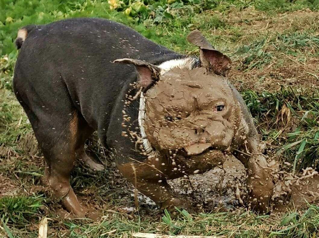 Mud Bath......