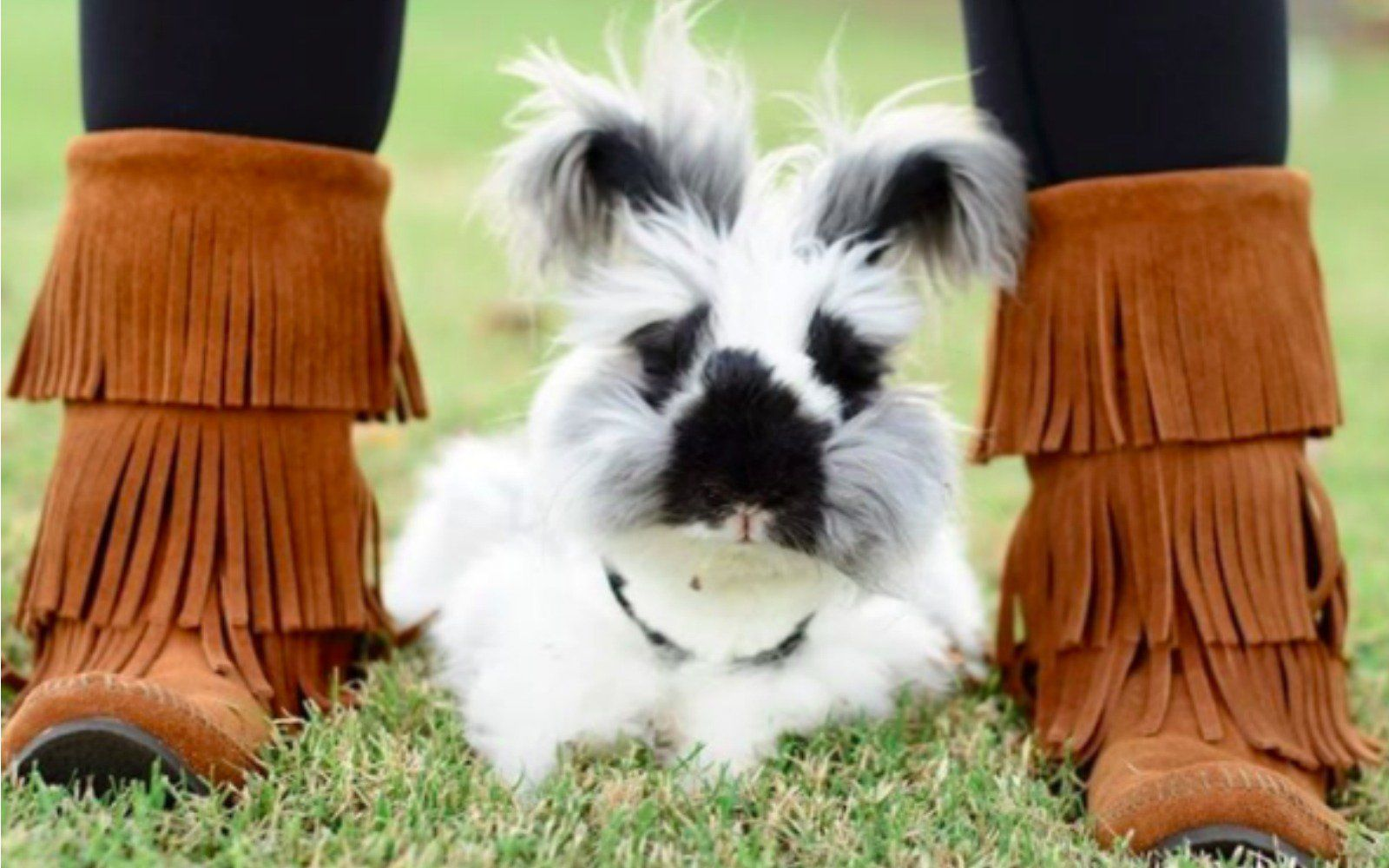 Is He a Puppy or a Bunny? Check Out This Adorable Adopted
