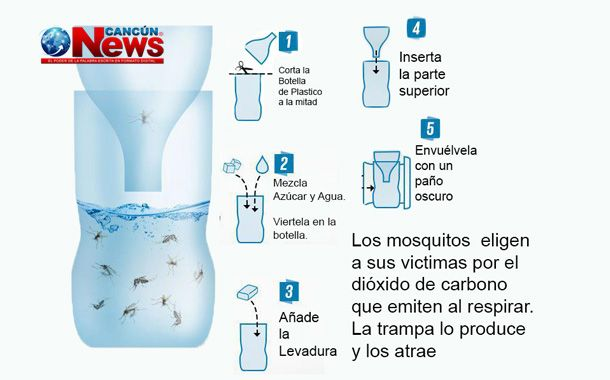 Trampa Casera Para Mosquitos Trampa Para Mosquitos Trucos De