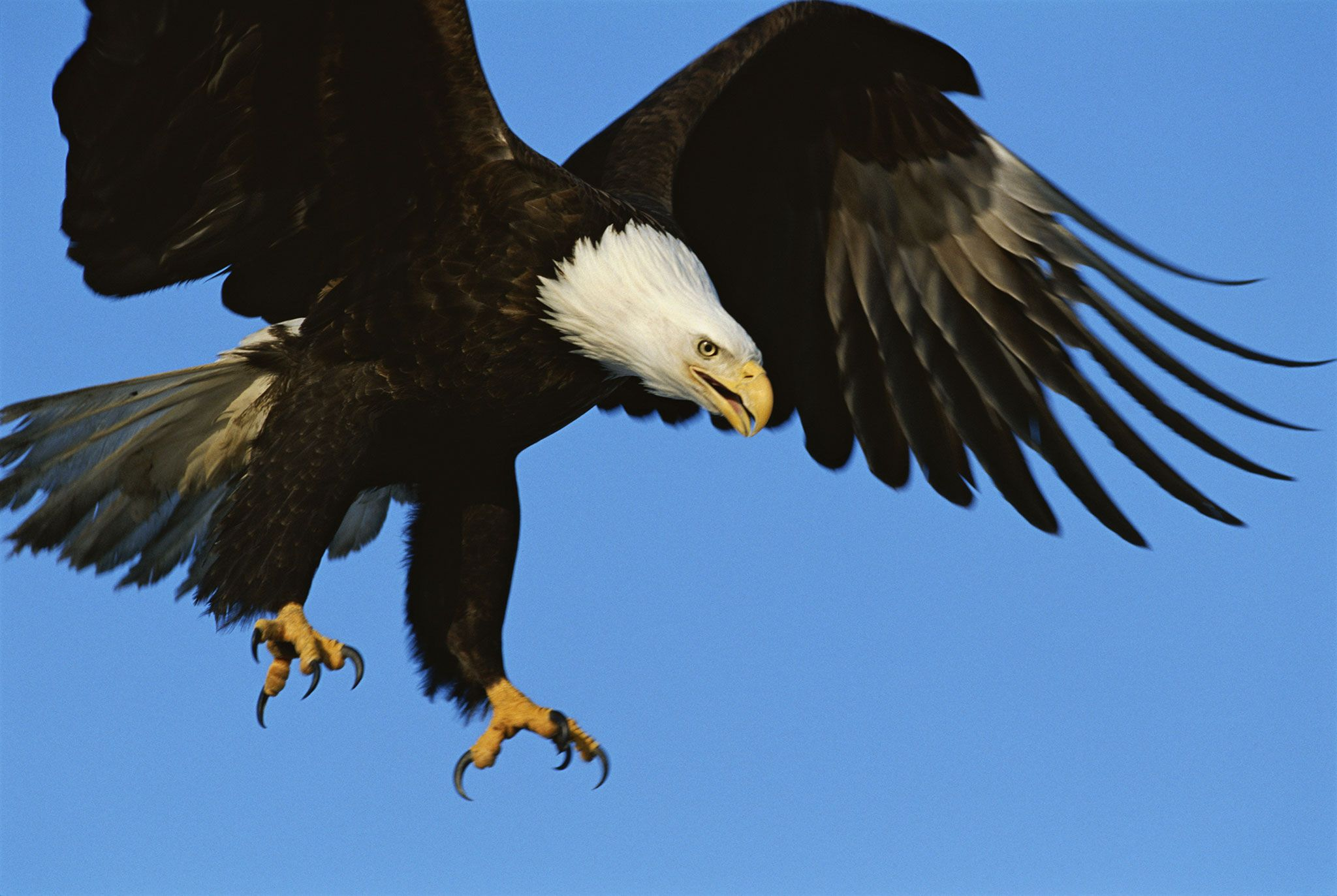 let u0027s not force eagles to fight rogue drones viral videos