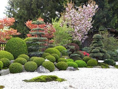 Zadní část zahrady zdobí kromě jiných dřevin nezbytná sakura (na snímku v květu).