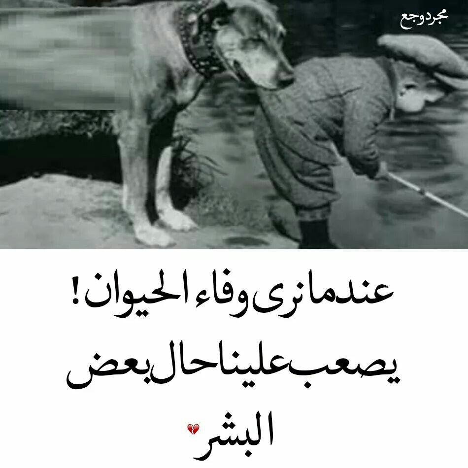 بيصعب علينا حال البشر Arabic Quotes Poetry Quotes Wonderful Words