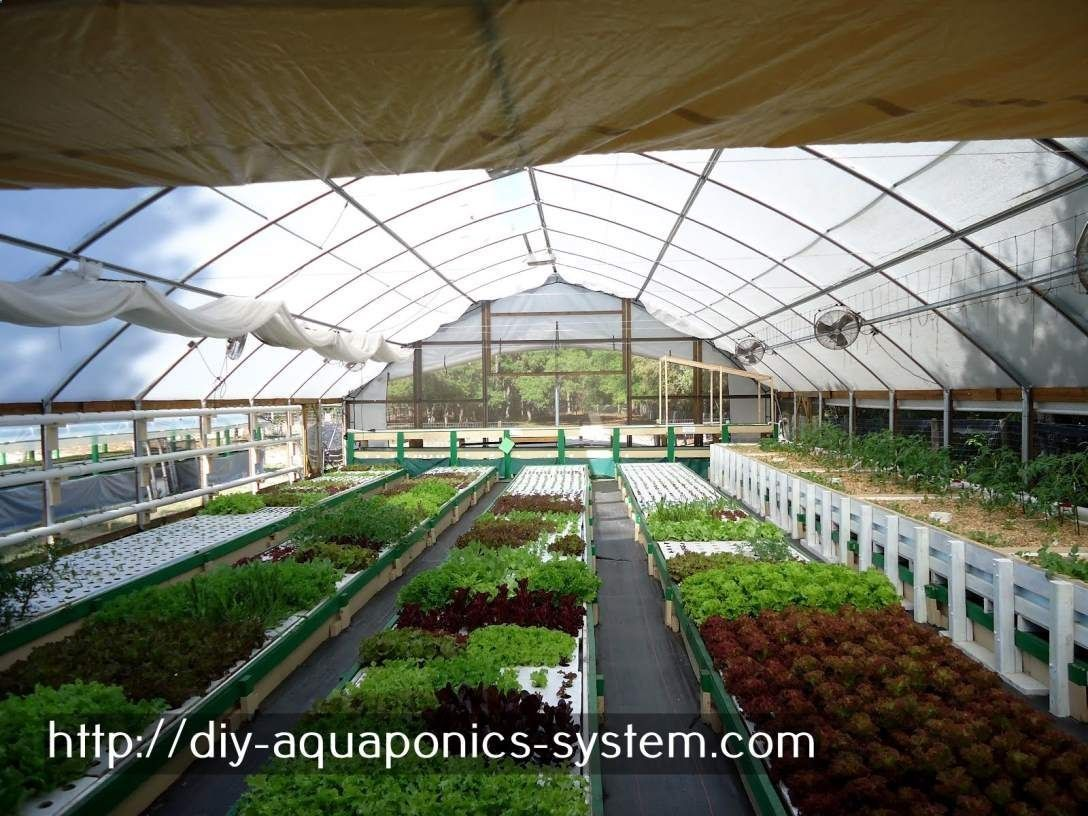 aqua garden plans best herbs for aquaponics.aquaponics