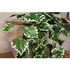 New US Hanging Artificial Ivy Leaf Garland Plants Vine Fake Foliage Home Decor #Wedding Supplies #leafgarland New US Hanging Artificial Ivy Leaf Garland Plants Vine Fake Foliage Home Decor #Wedding Supplies #leafgarland New US Hanging Artificial Ivy Leaf Garland Plants Vine Fake Foliage Home Decor #Wedding Supplies #leafgarland New US Hanging Artificial Ivy Leaf Garland Plants Vine Fake Foliage Home Decor #Wedding Supplies #leafgarland