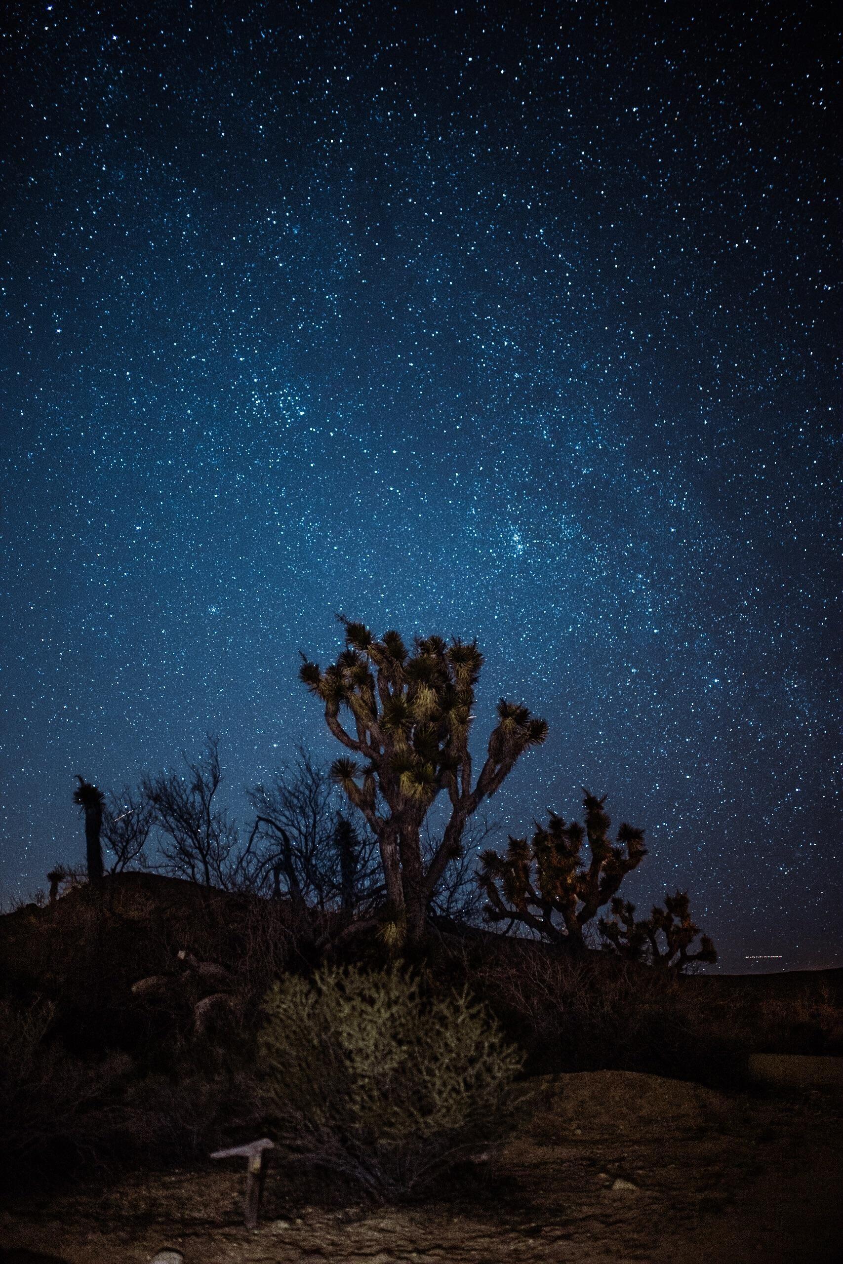 Starry Night In Joshua Tree Ca Joshua Tree Joshua Tree National Park Sky Pictures Cactus trees night starry sky wallpaper