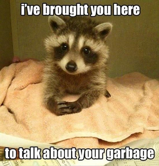 10 Funny Animal Moments To Cheer Up Your Day Funny Animal Memes Baby Raccoon Cute Animals