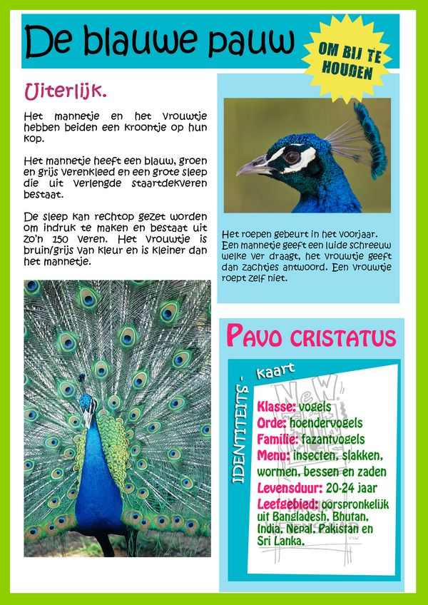 Steekkaart - De blauwe pauw