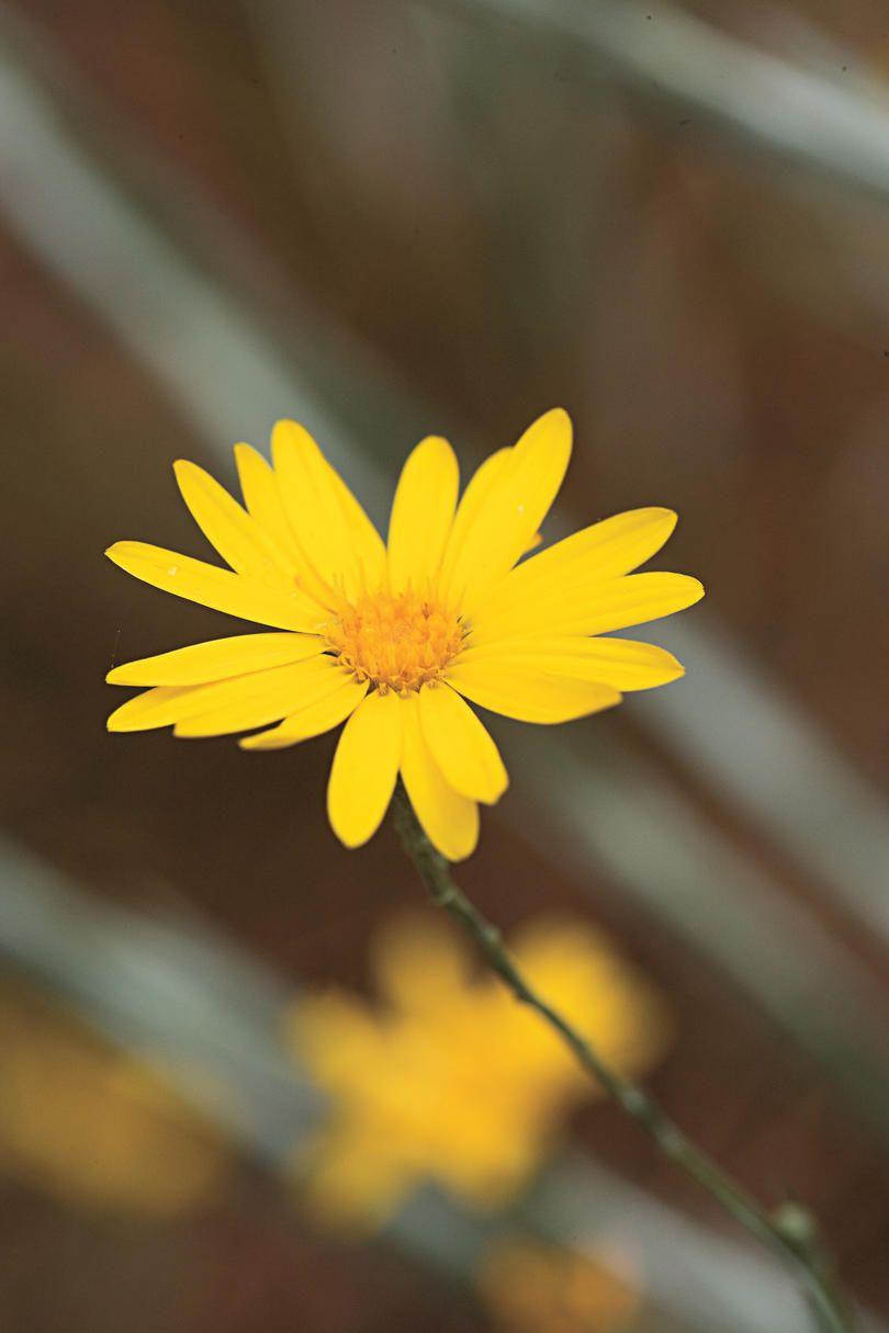 10 Drought Tolerant Native Plants Garden Pinterest Drought