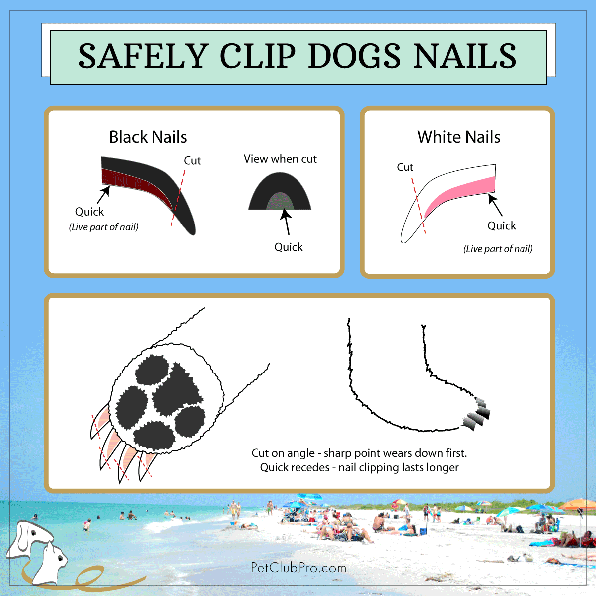 safely clip dogs nails | Pit Bull Mom | Pinterest | Dog nails, Pet ...