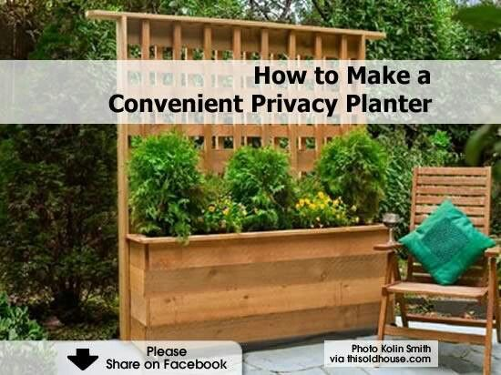 Privacy fence planter box garden ideas pinterest for Privacy wall planter