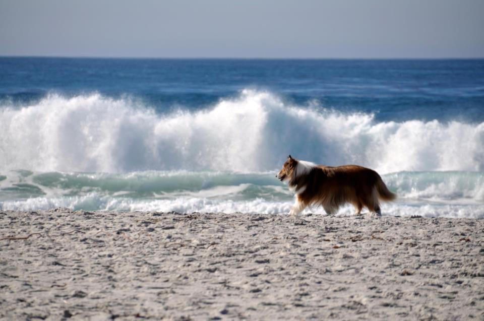 Big waves today