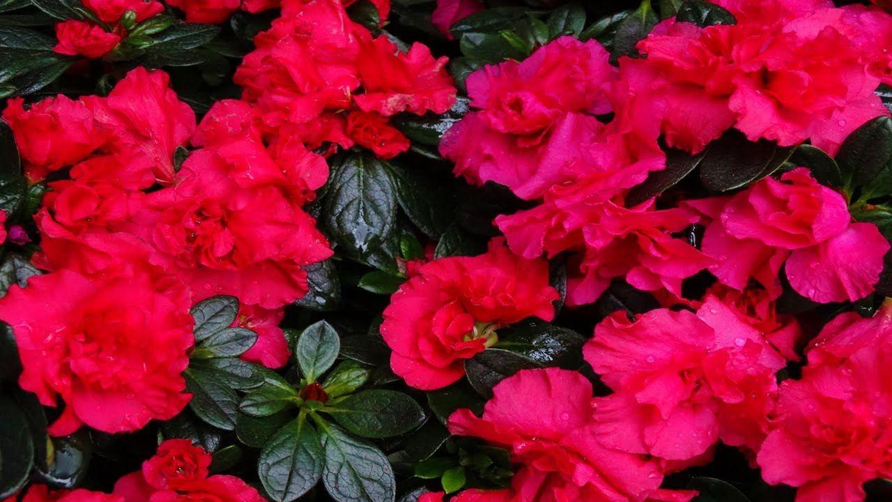 Flora Und Botanischer Garten Koln Flora And Botanical Garden Cologne 2014 Fullhd Botanischer Garten Garten Flora