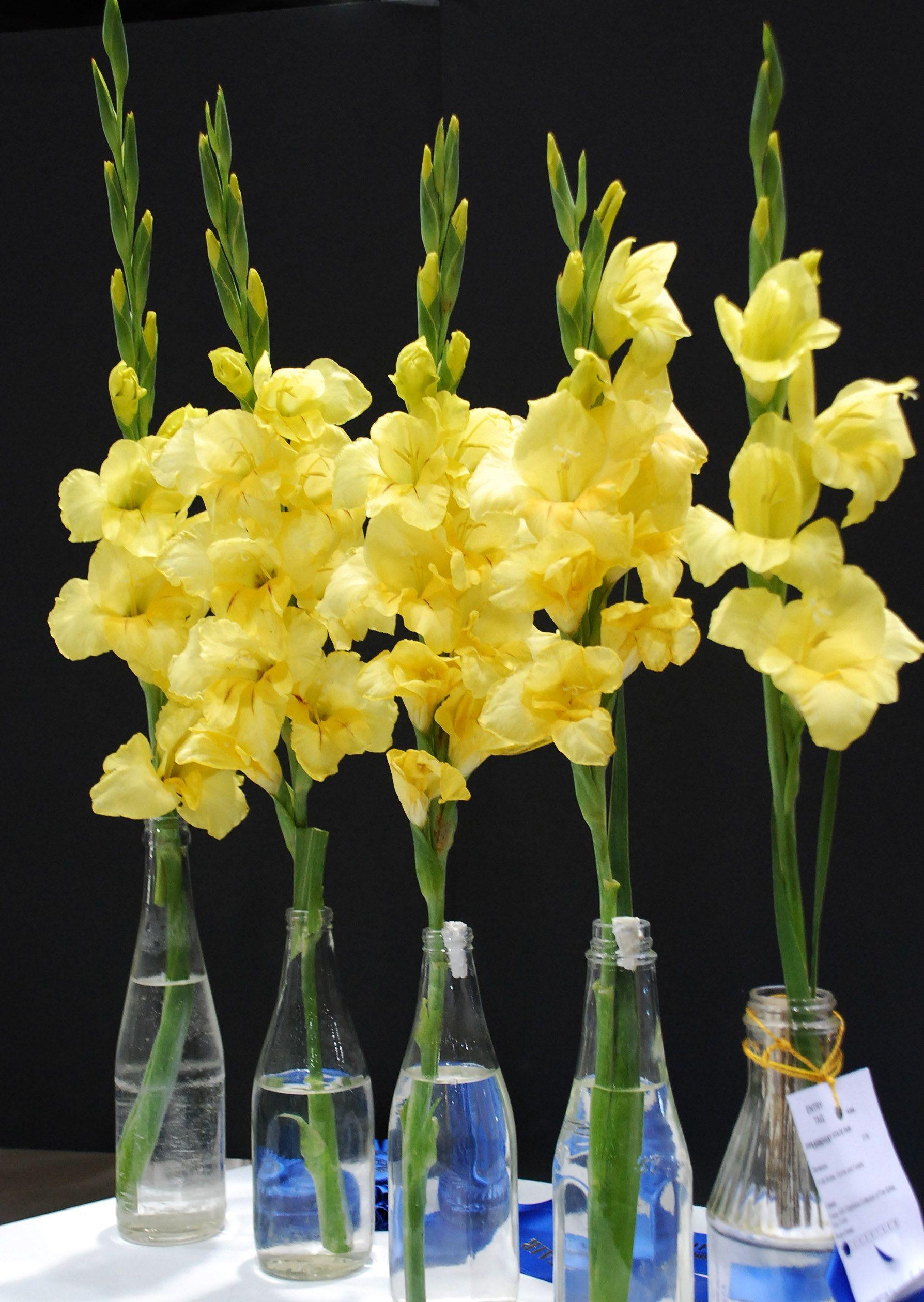 Winning flower arrangements from the Kentucky State Fair