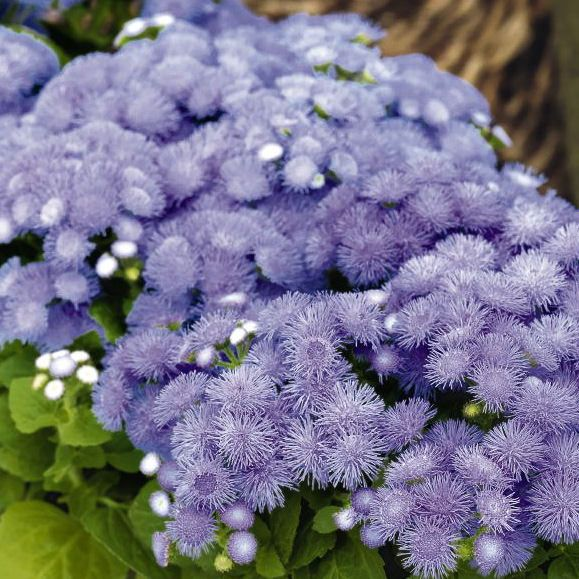 Pin On Flower Garden
