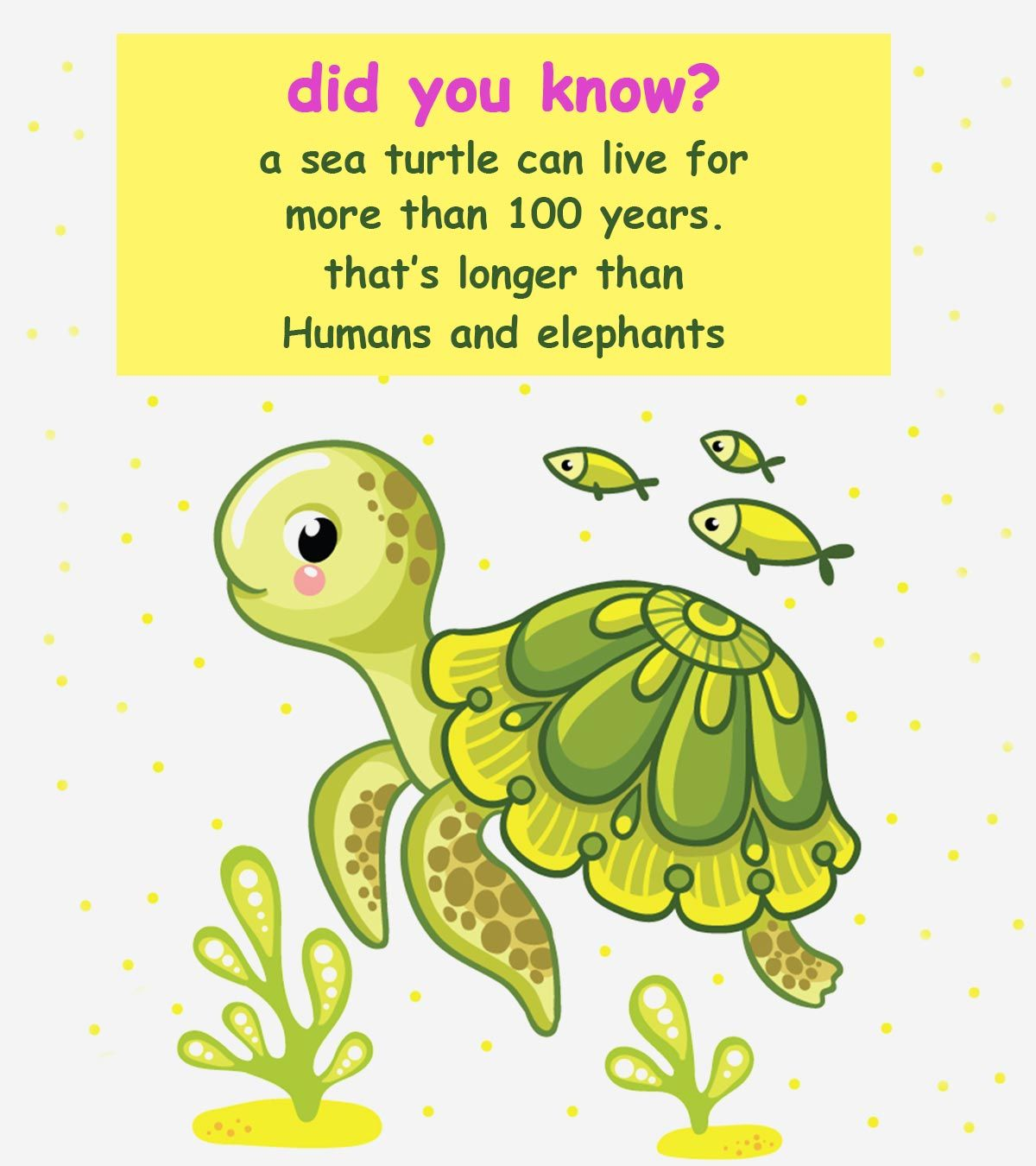 Ocean Facts For Kids