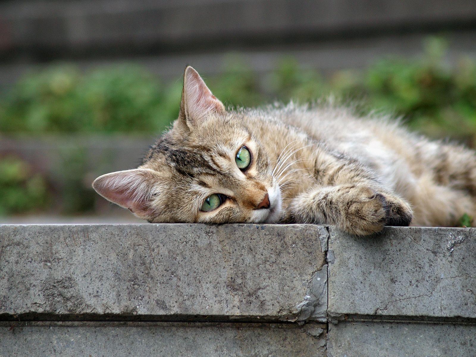 Street cat 72 Crazy cat people, Crazy cats, Cats