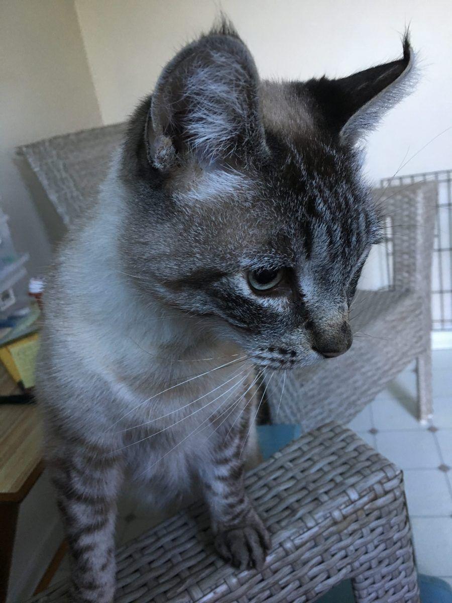 Treating My Cat S Severe Ibd And Gastrointestinal Inflammation Gastrointestinal Inflammatory Bowel Disease Cat Health Care