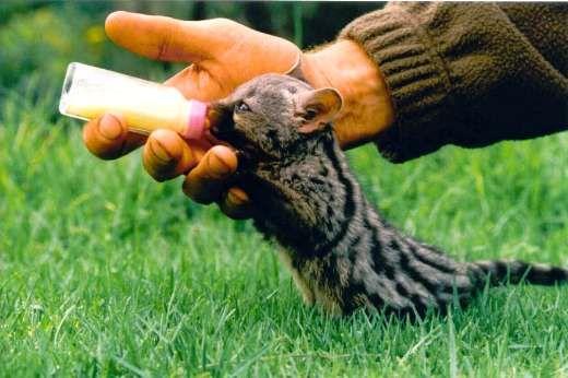 Baby Genet