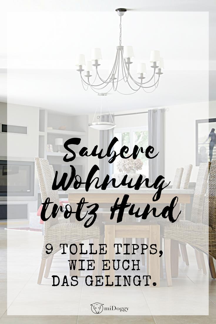 Meine 9 Tipps Fur Einen Sauberen Haushalt Mit Hund Hunde Hunde Geruch Tipps