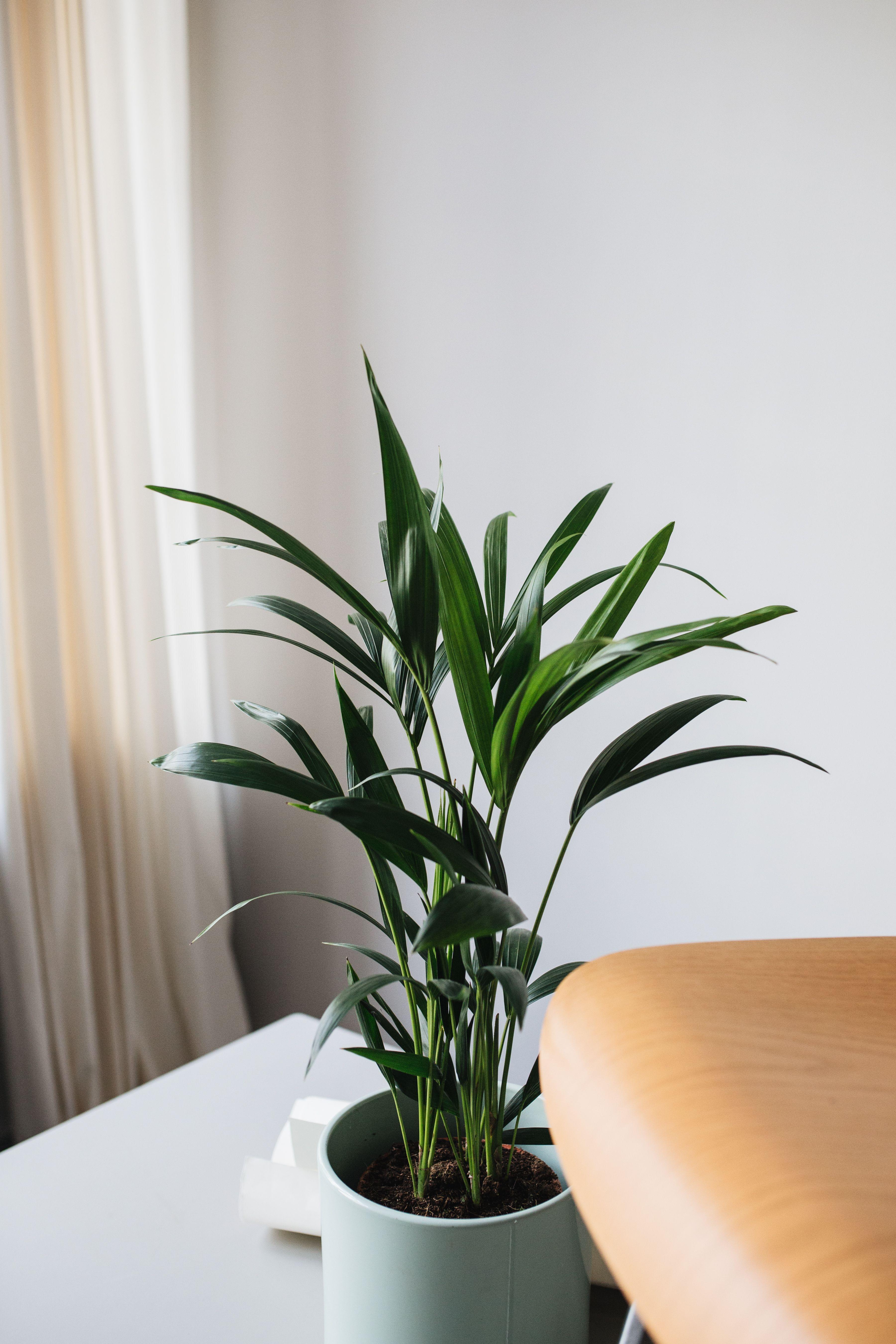 De Zimmerpflanzen Wenig Licht Hangepflanzen Zimmer Indoor Pflanzen Dekor