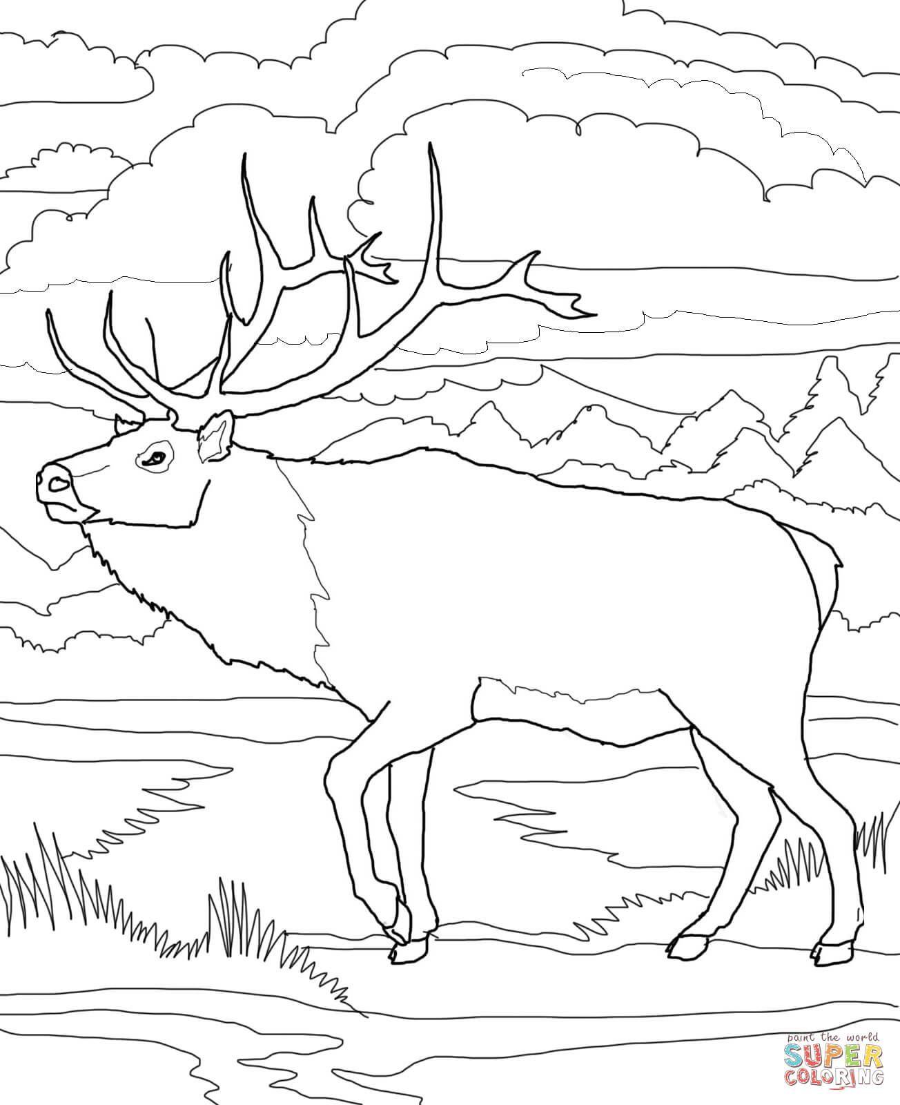Image Result For Caribou Color Sheet Deer Coloring Pages Coloring Pages Nature Cool Coloring Pages