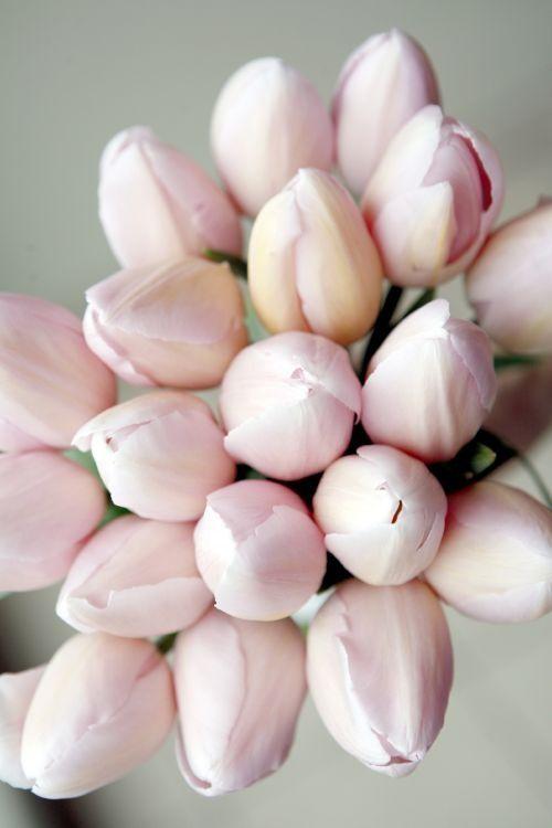 Las flores que marcan tendencia en los ramos de novia #ramos #novia #flores #aperfectlittlelife ☁ ☁ A Perfect Little Life ☁ ☁ www.aperfectlittlelife.com ☁