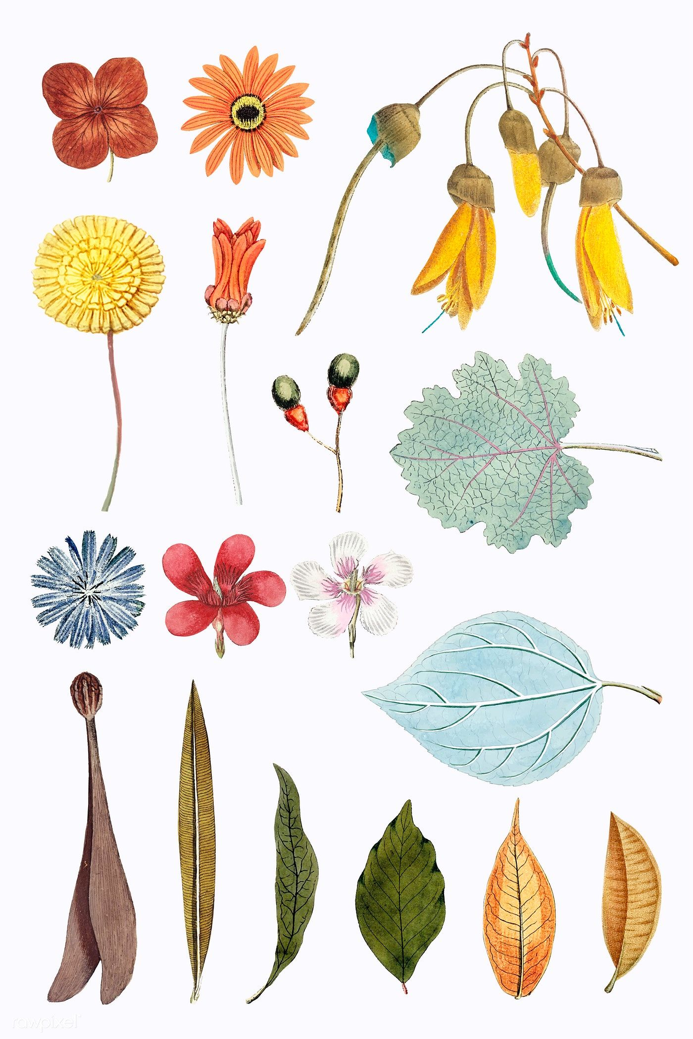 Download premium vector of Mixed flowers and leaves set