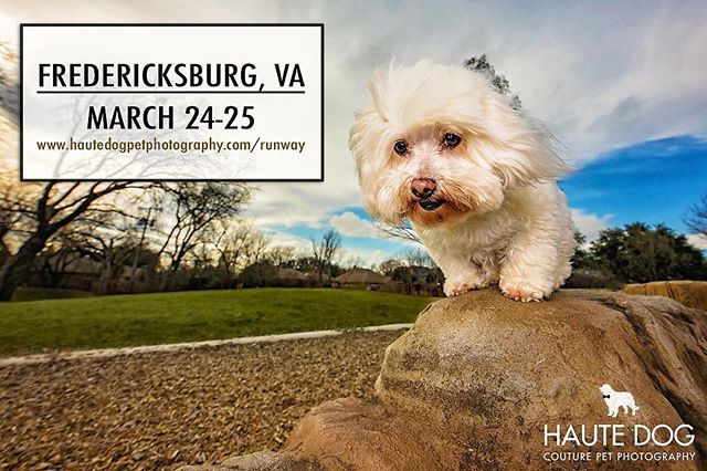 Just Announced We Have Two Sessions Available In Fredericksburg Va And Surrounding Areas March 24 And 2 Dog Photograph Dog Pictures Pet Photographer