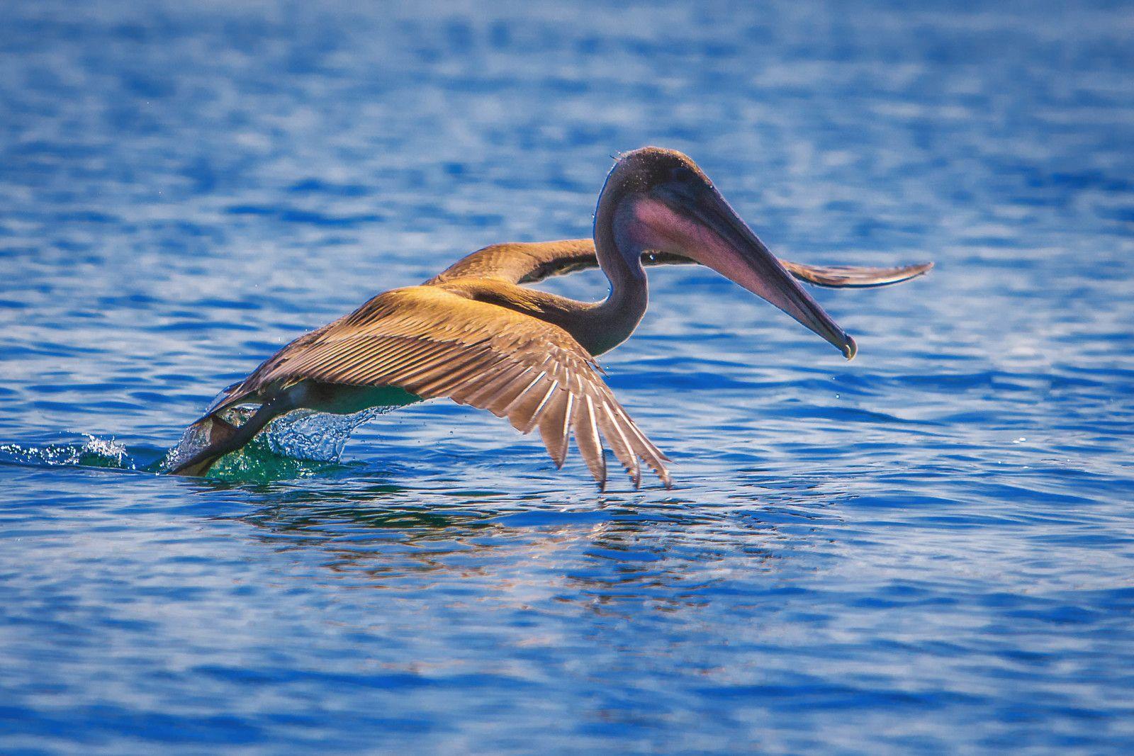 Wildlife of the Galapagos #photography #photooftheday #travel #travelphotography #traveling #wildlife #wildlifephotography #wildlifephotos #btpanimalpro #stunningmoment #stunningnature #youtube #video #travelvideo https://plus.google.com/+HaroldGardner/posts/jnnpBq53WPs
