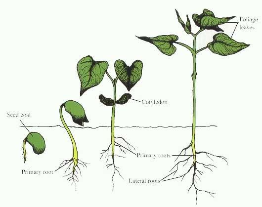 Plant Growth | Science | Pinterest | School