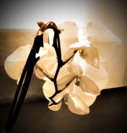 Flower byR.Begin