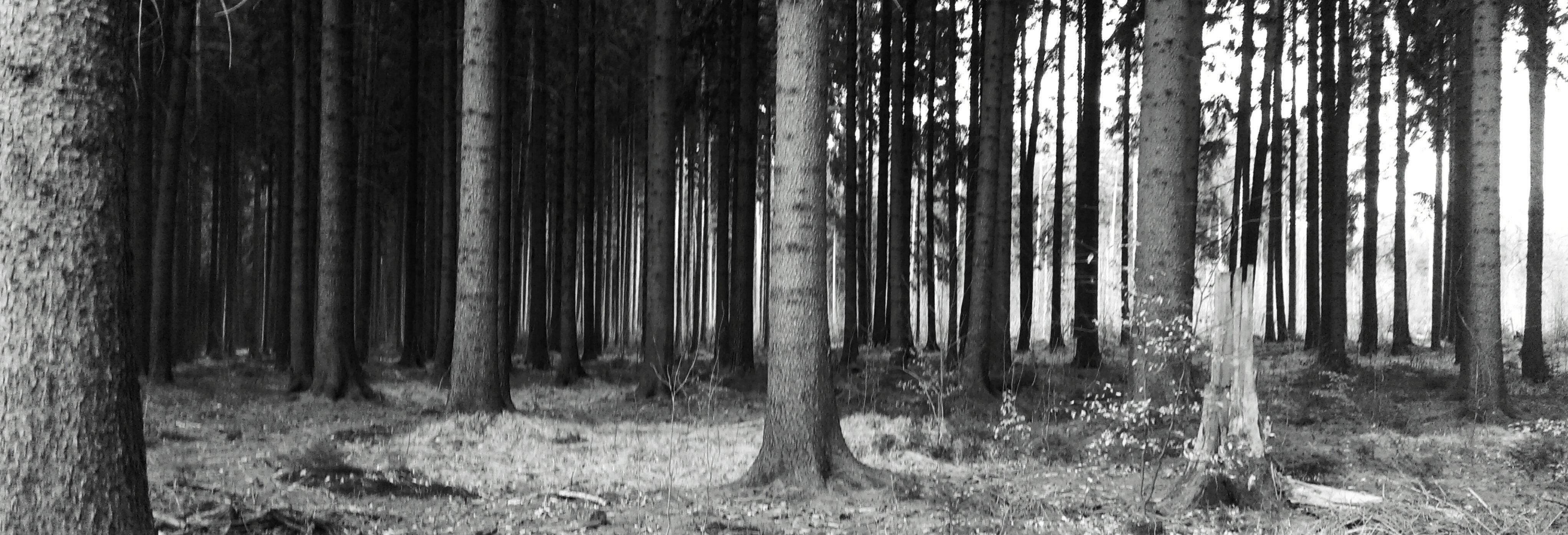 kühler Wald