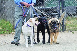 Finding a Reliable Dog Walker | Whole Dog Journal