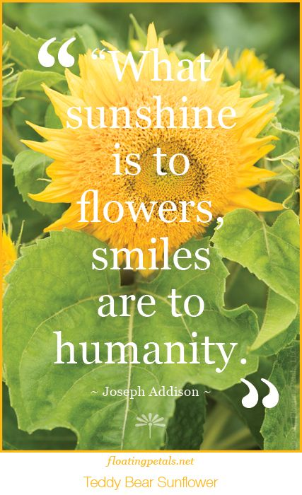 Hope This Brings A Smile To Your Face And Day Receive Monday S Flower Quote