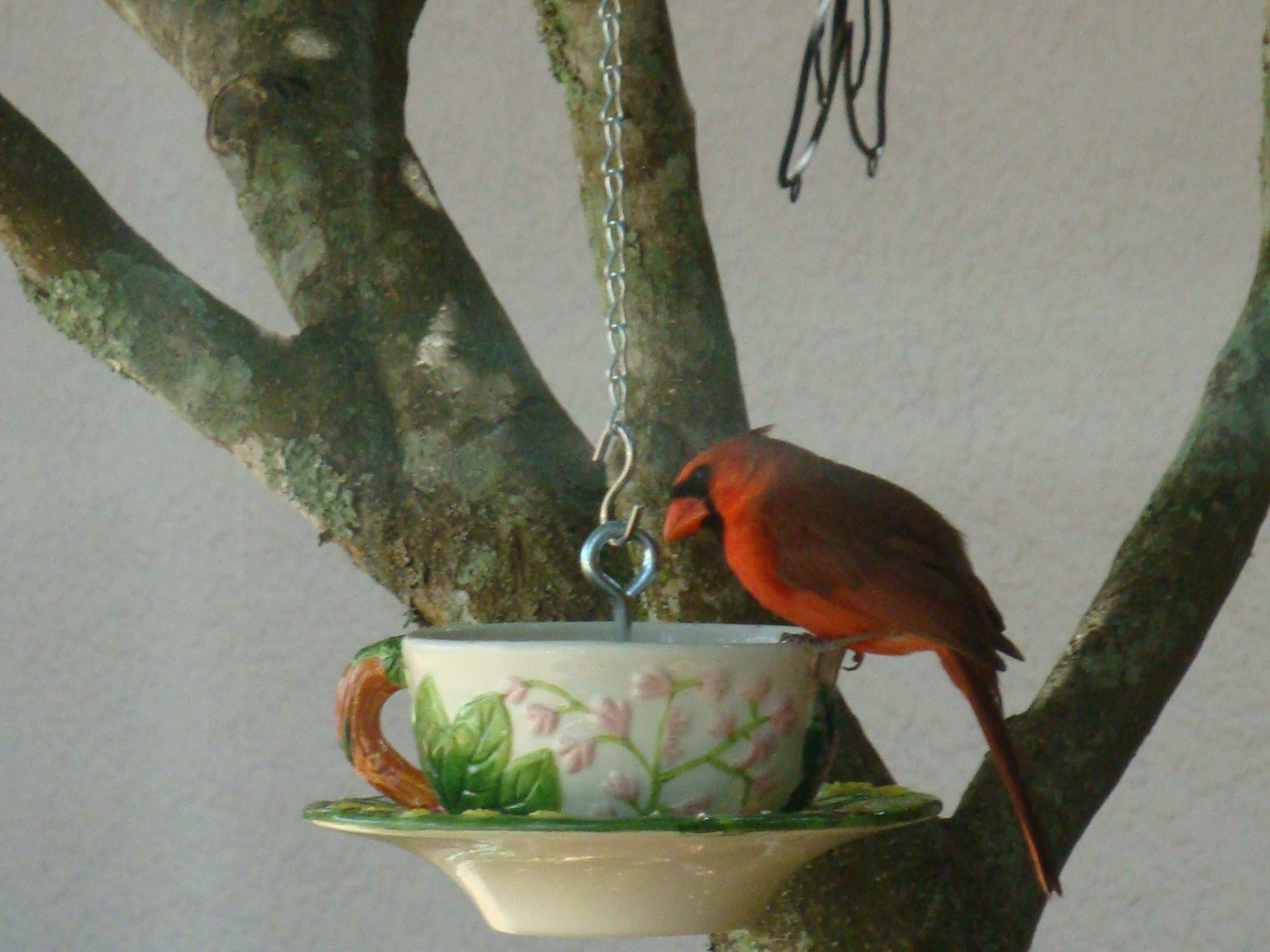 A tea cup bird feeder that i made