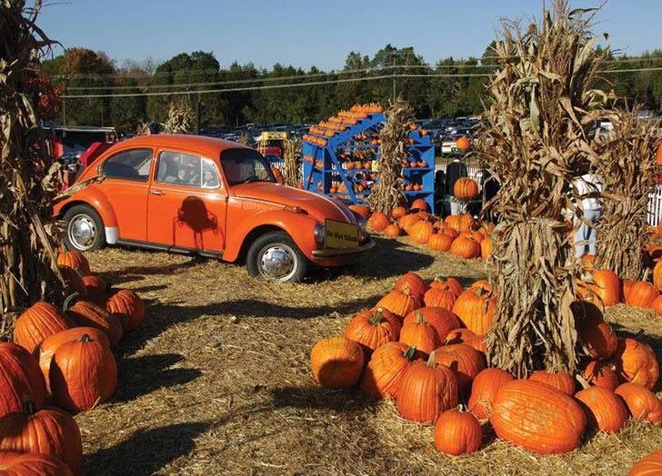 15 of the Best Pumpkin Patches in the Country