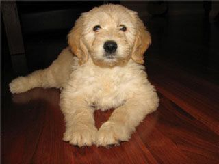 Gallery Puppies Baby Animals Pets