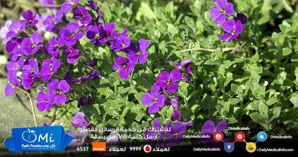 فوائد مذهلة لنبات ست الحسن Http Www Dailymedicalinfo Com P 75927 Herbs Plants Orange